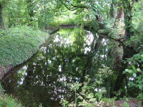 Droombosch